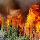 Ответственность за нарушение требований пожарной безопасности в лесах!